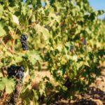 היין בפורטוגל